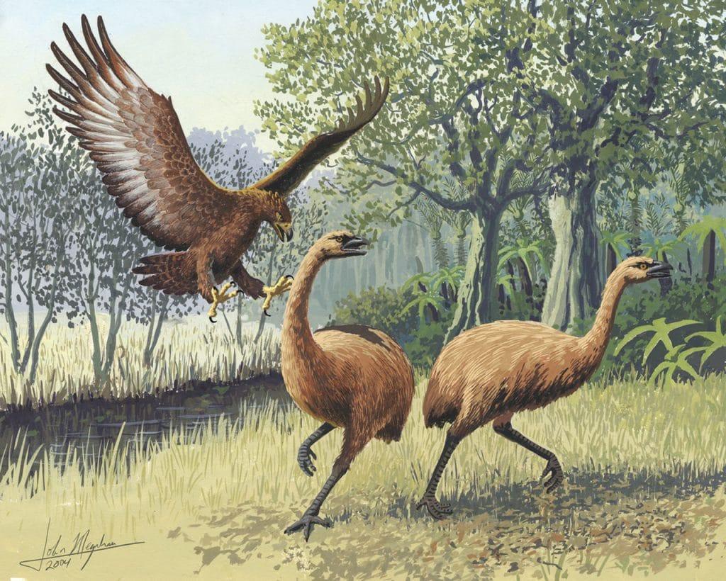 Haast's Giant Eagle