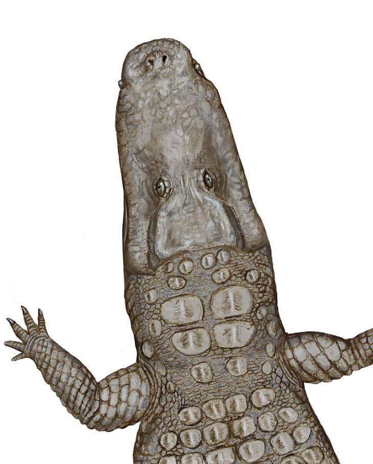Crocodylus Thorbjarnarsoni